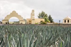 Se celebrará por primera vez en México el Día Nacional del Mezcal Oaxaqueño
